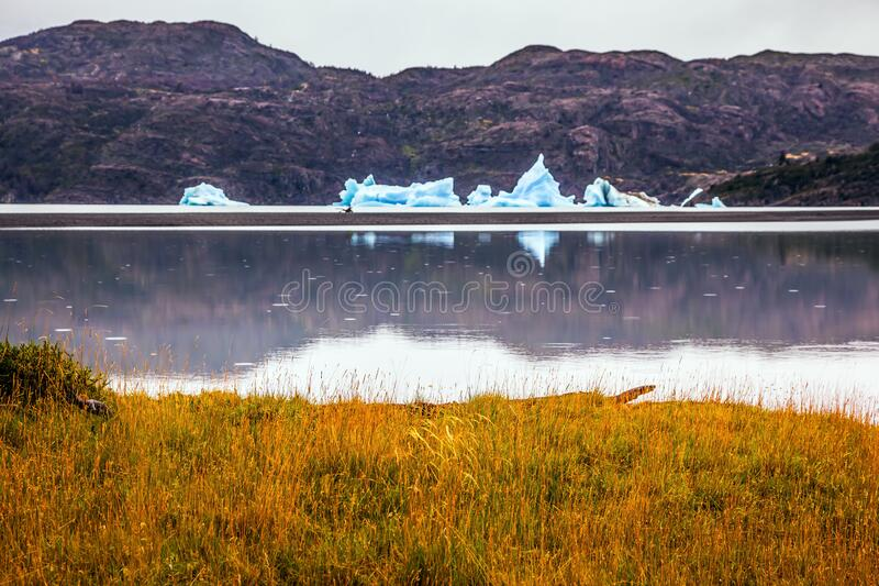Lago Gray is in February. Blue icebergs float on the water. Chile. Lago Gray is a glacial lake in February. Concept of active and exotic tourism stock image