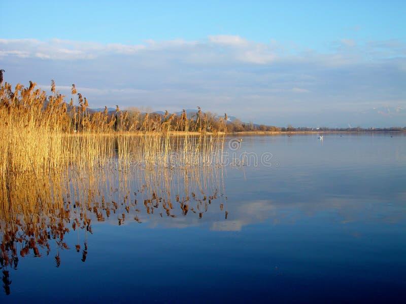 Lago Greifensee imágenes de archivo libres de regalías