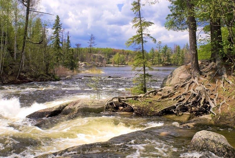 Lago gull, rapids, bwcaw fotografia stock