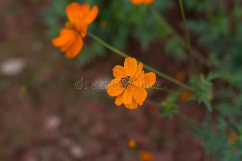 Lago Haizhu di fotografia della pianta del fiore di Sun fotografia stock libera da diritti