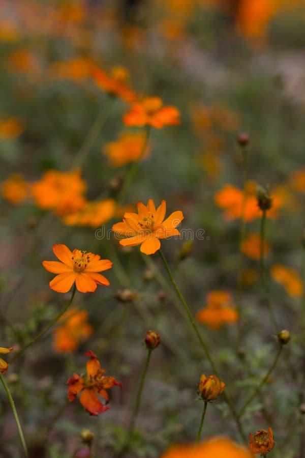 Lago Haizhu di fotografia della pianta del fiore di Sun fotografie stock libere da diritti