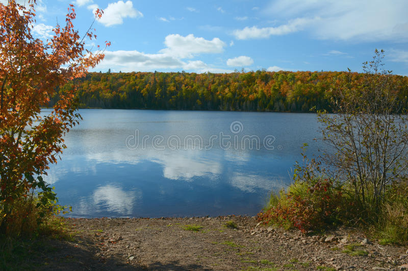 Lago hare - Autumn Excerpt fotos de stock