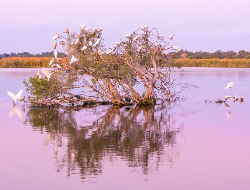 Lago herdsman en la oscuridad foto de archivo