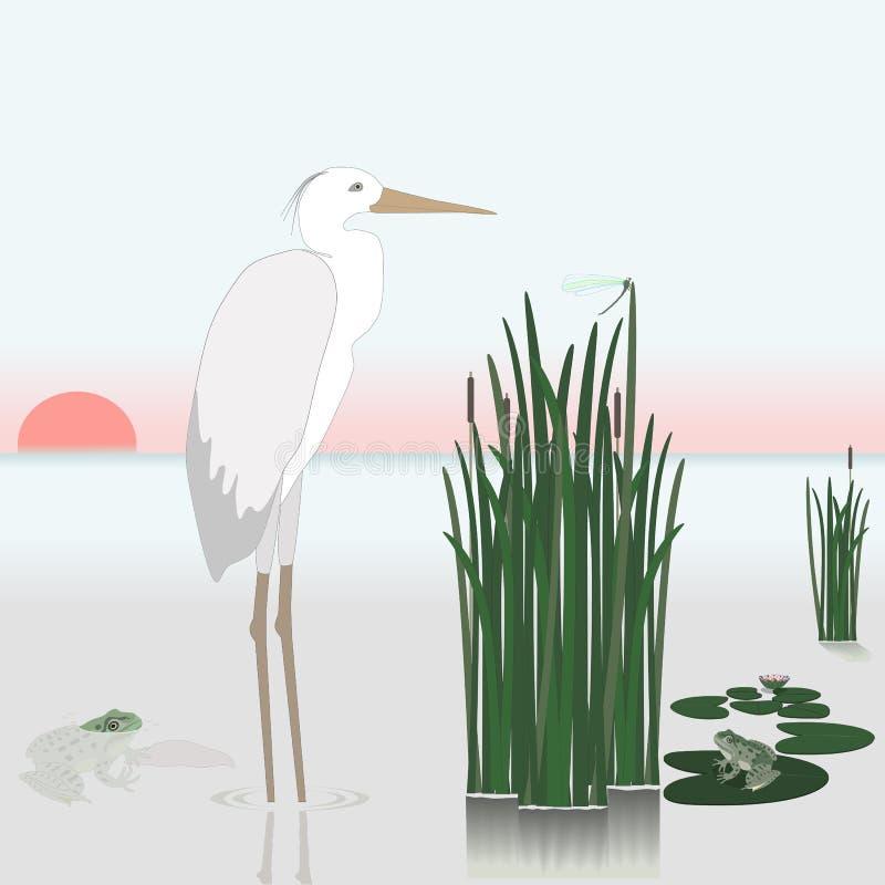 Lago hermoso con las cañas, las garzas y las ranas Puesta del sol libre illustration