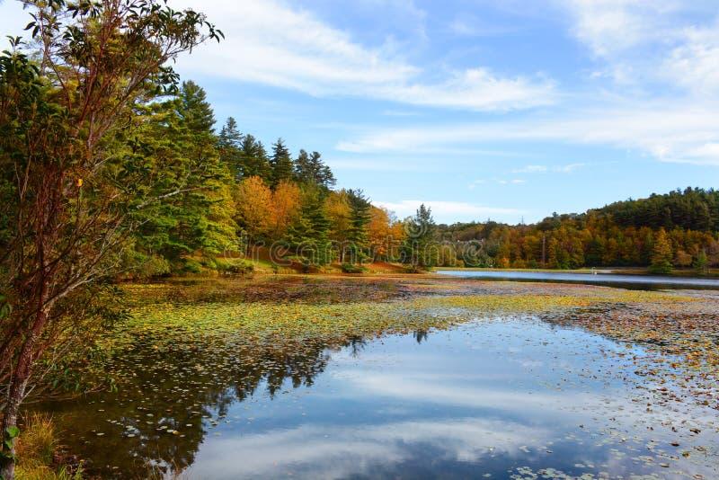 Lago hermoso con las vainas flotantes del lirio en bosque del otoño imágenes de archivo libres de regalías