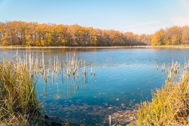 Lago hermoso en el bosque del otoño contra el cielo azul imagen de archivo