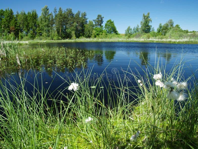 Lago hermoso en las maderas imagen de archivo libre de regalías