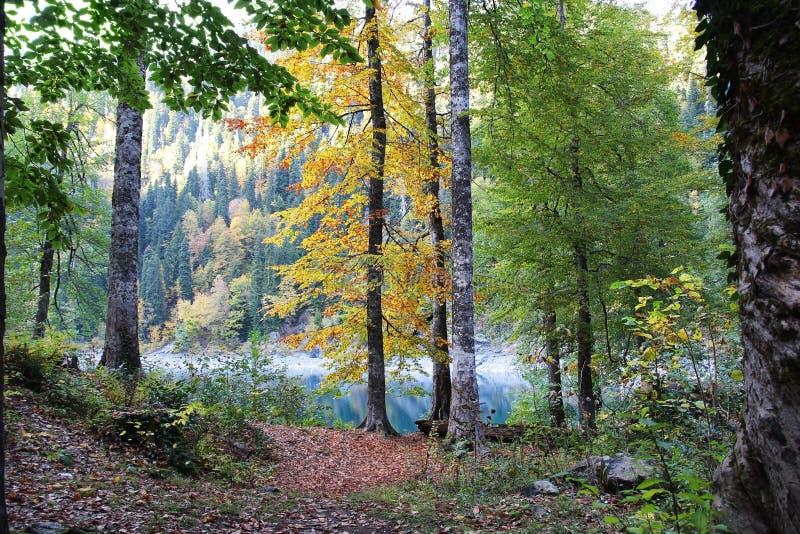 Lago hermoso rodeado por las montañas y los bosques en otoño Malaya Ritsa, Abjasia foto de archivo libre de regalías
