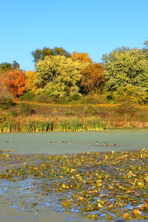 Lago Illinois septentrional Olson imagenes de archivo