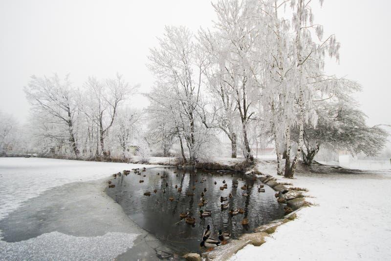 Lago innevato della foresta e di legno immagine stock