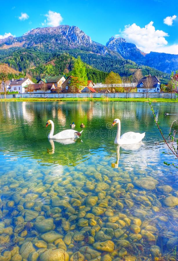 Lago Innsbruck Austria swan fotografie stock