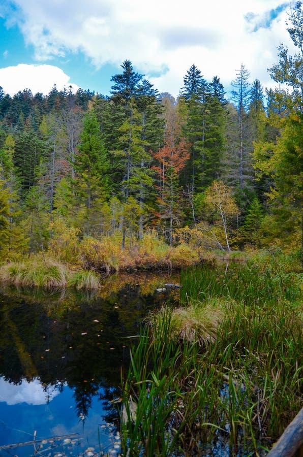 Lago inoperante na floresta, montanhas arpathian do ¡ de Ð, Skole, Uktaine fotografia de stock royalty free