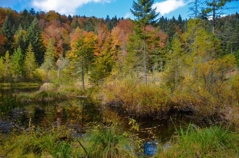 Lago inoperante na floresta, montanhas arpathian do ¡ de Ð, Skole, Uktaine fotografia de stock