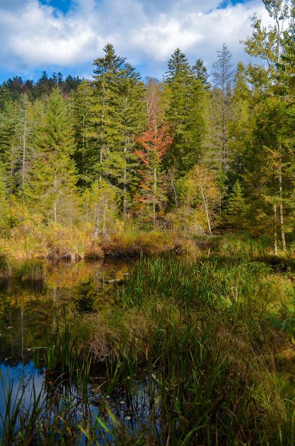 Lago inoperante na floresta, montanhas arpathian do ¡ de Ð, Skole, Uktaine imagens de stock