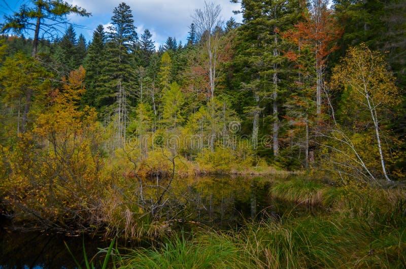 Lago inoperante na floresta, montanhas arpathian do ¡ de Ð, Skole, Uktaine fotos de stock