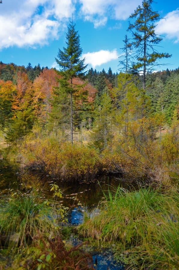 Lago inoperante na floresta, montanhas arpathian do ¡ de Ð, Skole, Uktaine imagem de stock