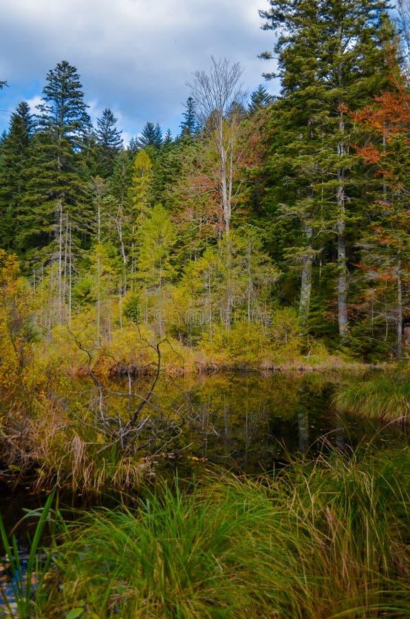 Lago inoperante na floresta, montanhas arpathian do  de Ñ, Skole, Uktaine fotos de stock royalty free