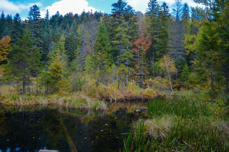 Lago inoperante na floresta, montanhas Carpathian, Skole, Uktaine imagem de stock royalty free