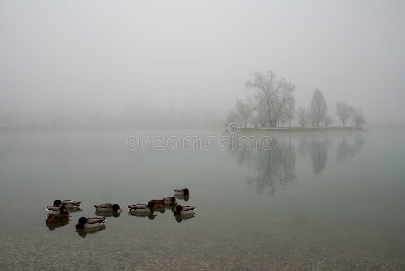 Lago Jarun foto de stock