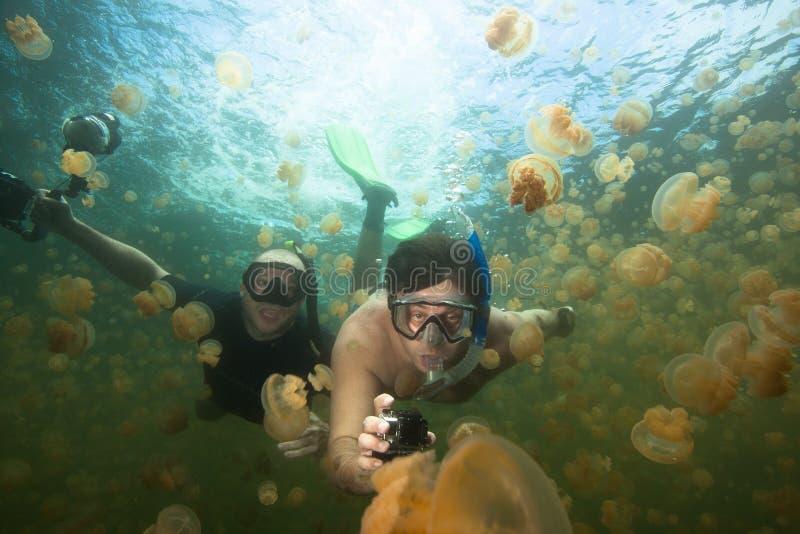 Lago jellyfish fotos de stock