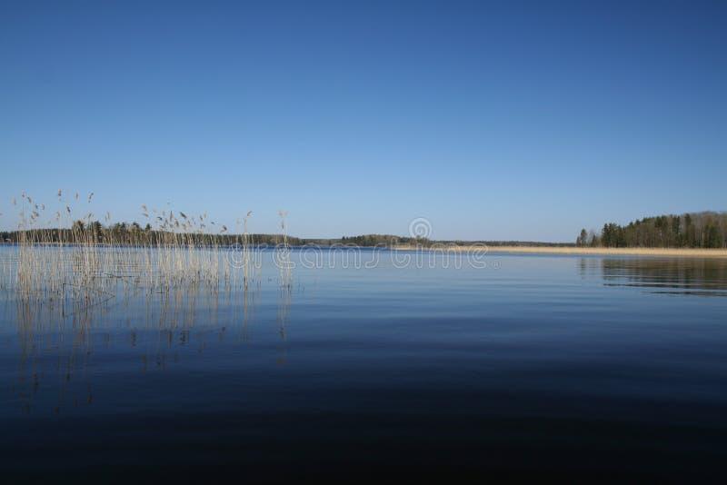 Lago juncoso imagen de archivo