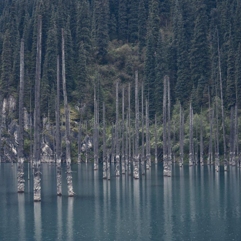 Lago Kaindy Alberi morti sopra il lago Contro il contesto degli abeti fotografie stock