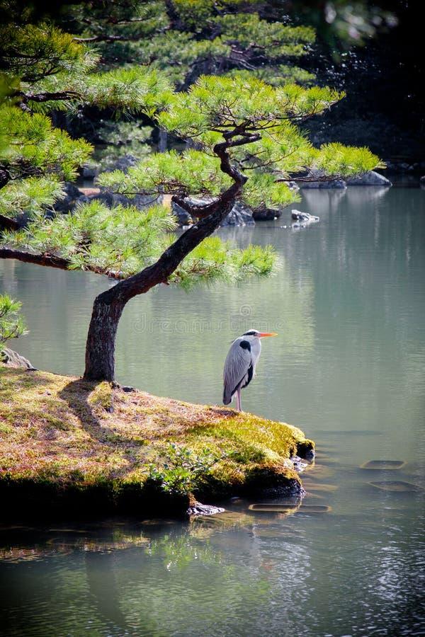Lago Kinkakuji Foto de Stock