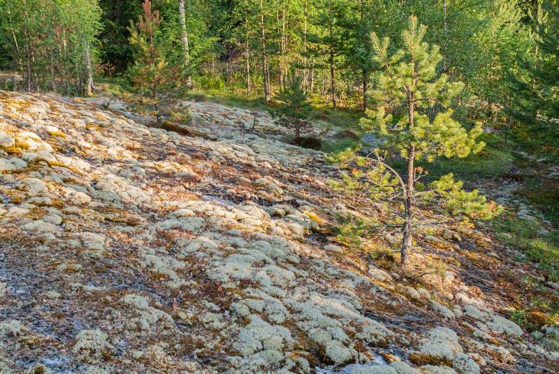 Lago Ladoga - visita el Parque Nacional fotos de archivo