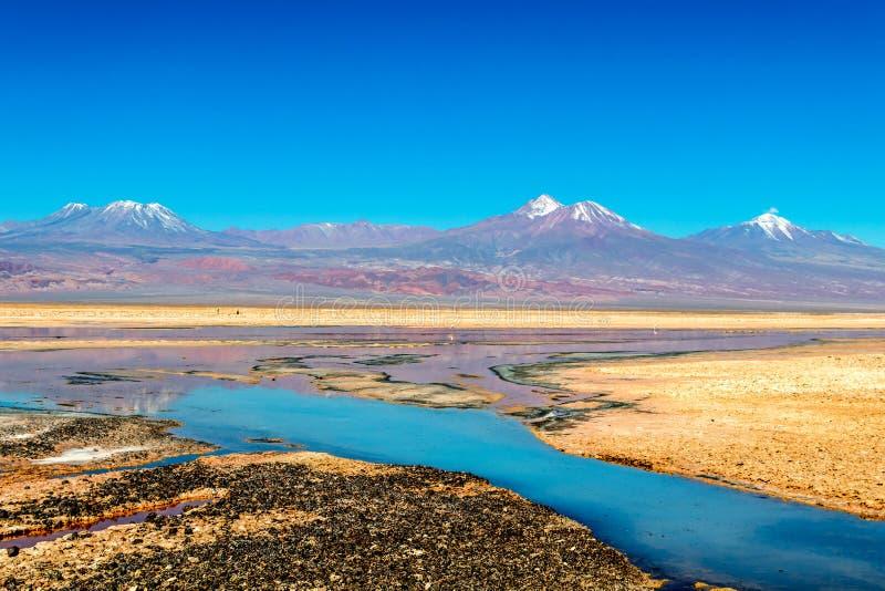Lago Laguna Chaxa Chaxa con la reflexión de alrededores y del cielo azul en Salar de Atacama, lago Laguna Chaxa chile Chaxa con fotos de archivo libres de regalías
