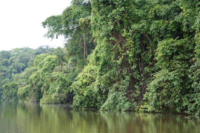 Lago Landcape jungle fotografia de stock