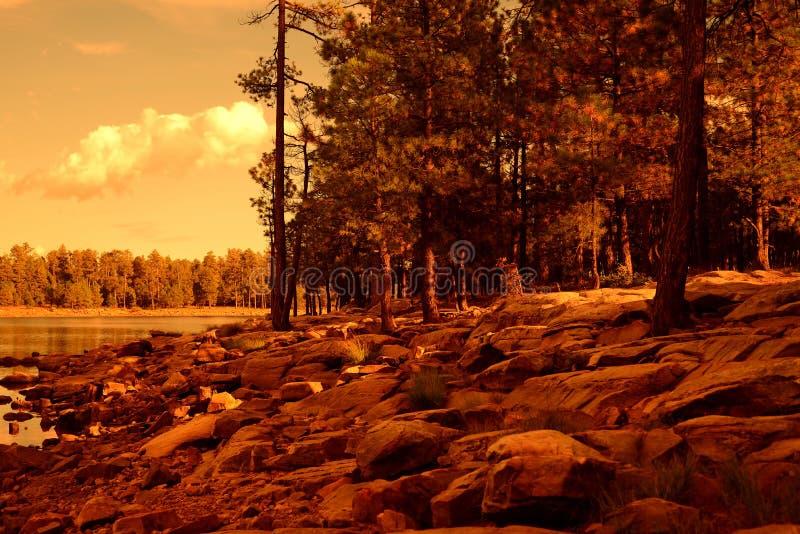 Lago leggero dorato della foresta fotografia stock