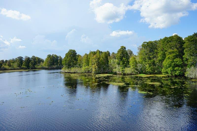 Lago lettuce foto de archivo