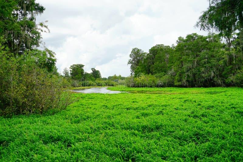 Lago lettuce fotos de archivo