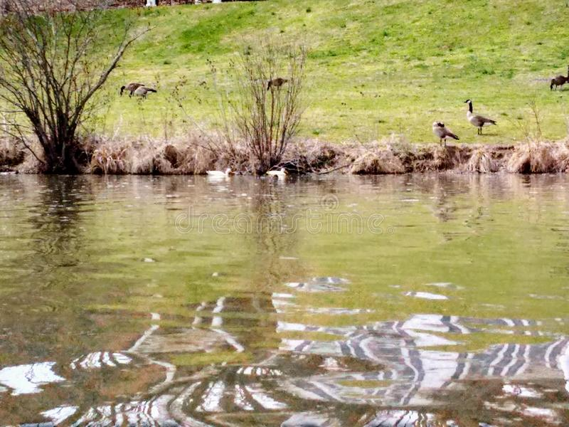 Lago Logan fotografia de stock