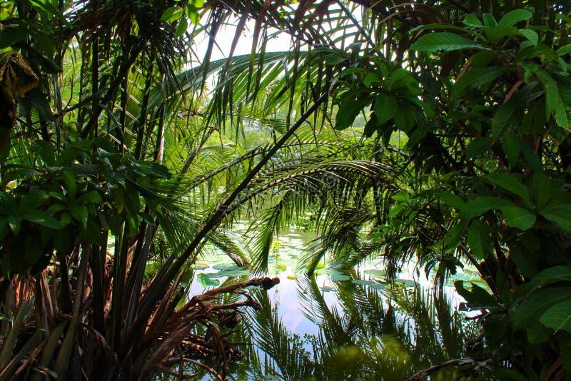 Lago Lumpini en el parque de Lumpini, Tailandia imagenes de archivo