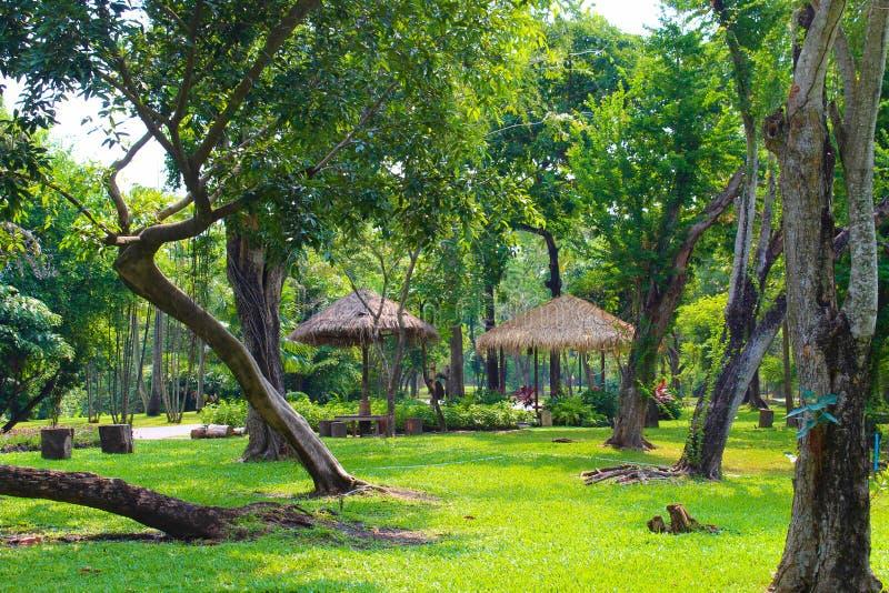 Lago Lumpini no parque de Lumpini, Tailândia imagens de stock royalty free