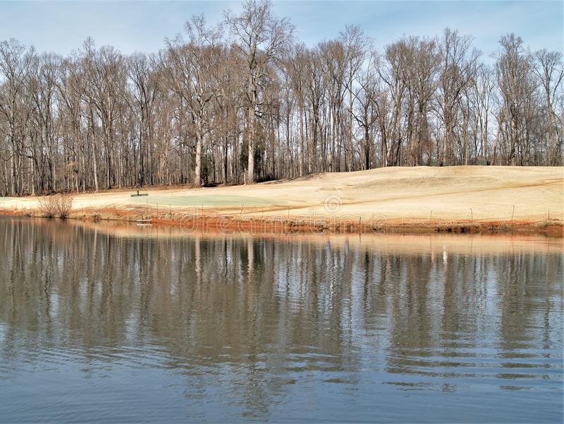 Lago mallard no parque de Tanglewood fotografia de stock royalty free