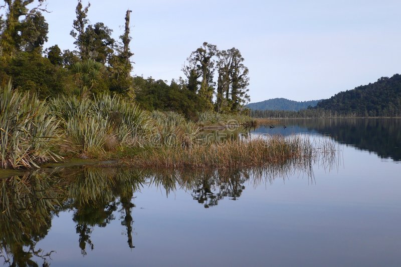 Lago Mapourika reflections, NZ fotos de stock royalty free