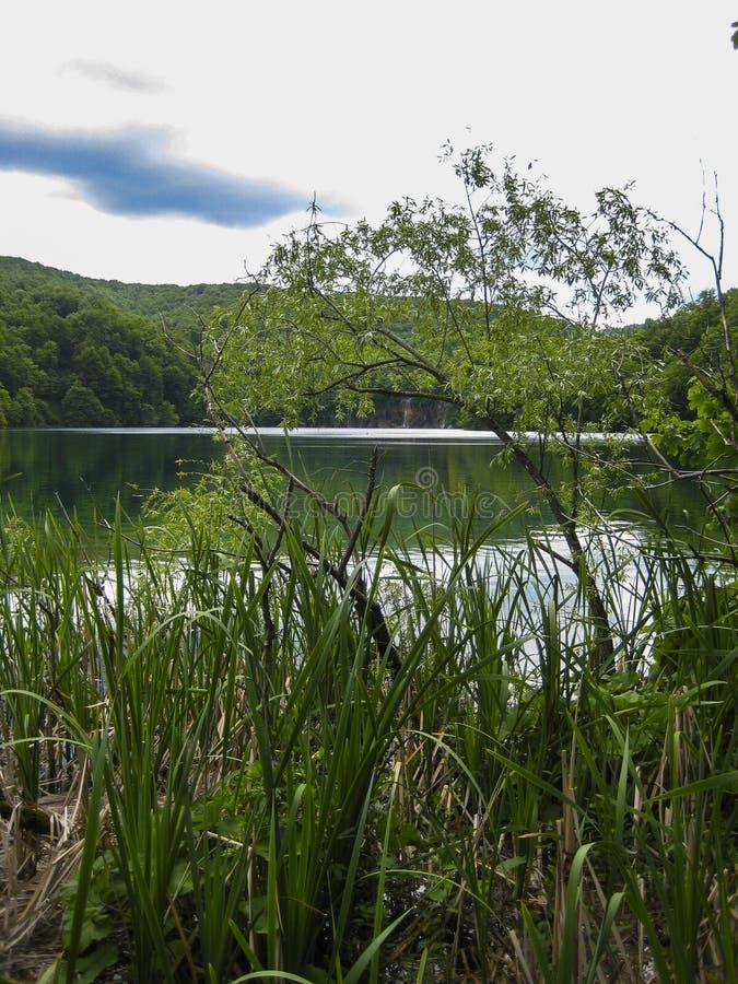 lago maravilloso en el medio del bosque fotos de archivo