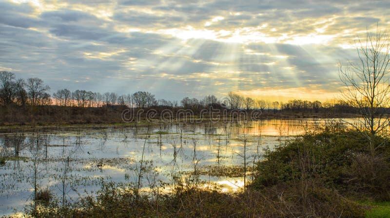 Lago marsh en el amanecer fotografía de archivo