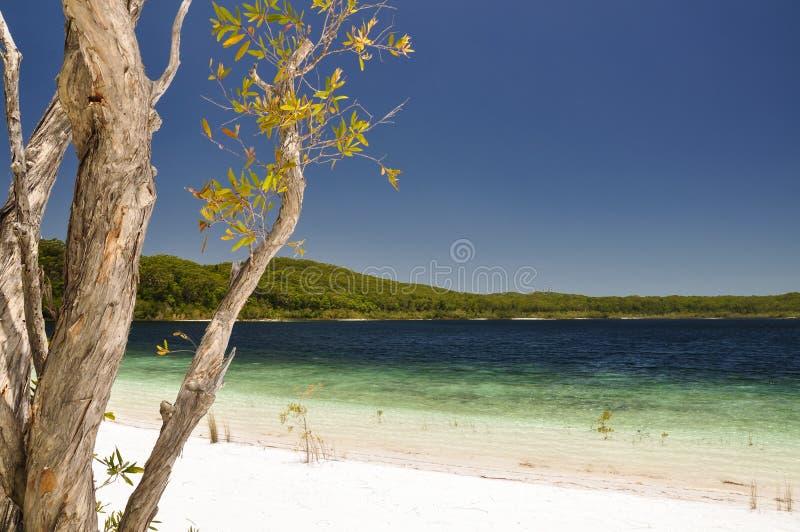 Lago McKenzie en Fraser Island - Queensland, Australia fotografía de archivo libre de regalías