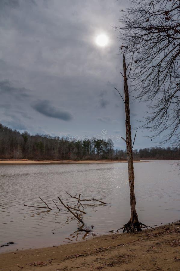 Lago melancólico del Playa-lado espeluznante muerto oscuro del árbol imágenes de archivo libres de regalías
