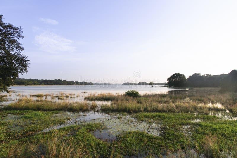 Lago Minneriya, depósito fotografía de archivo libre de regalías