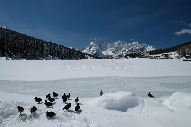 Lago Misurina no dia ensolarado do inverno fotografia de stock