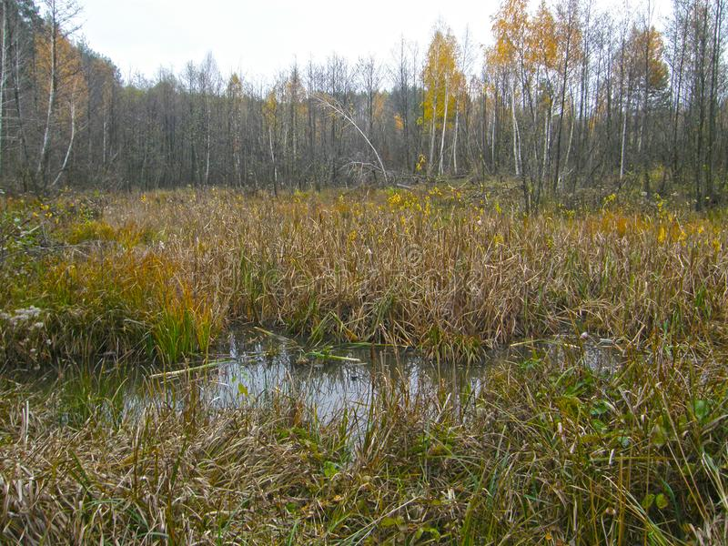 Lago molhado na floresta imagens de stock royalty free