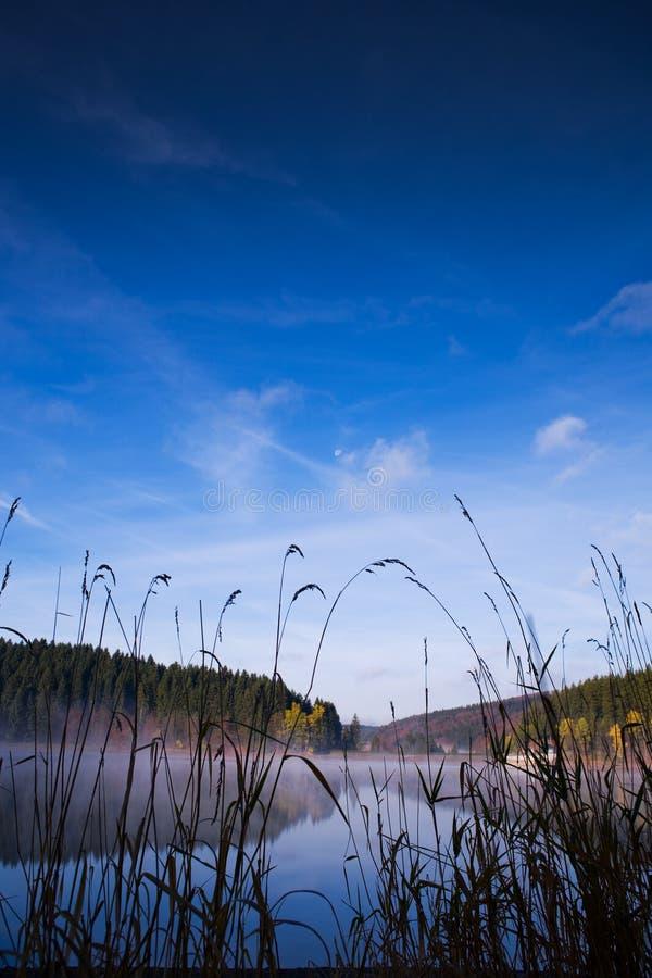 Lago morning fotografia de stock royalty free