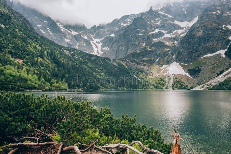 Lago Morskie Oko, montañas de Tatra, parque nacional de Tatra, Polonia fotos de archivo libres de regalías