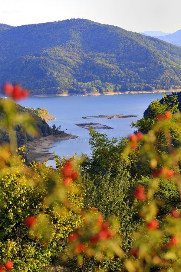 Lago mountain com os registros no por do sol fotos de stock royalty free