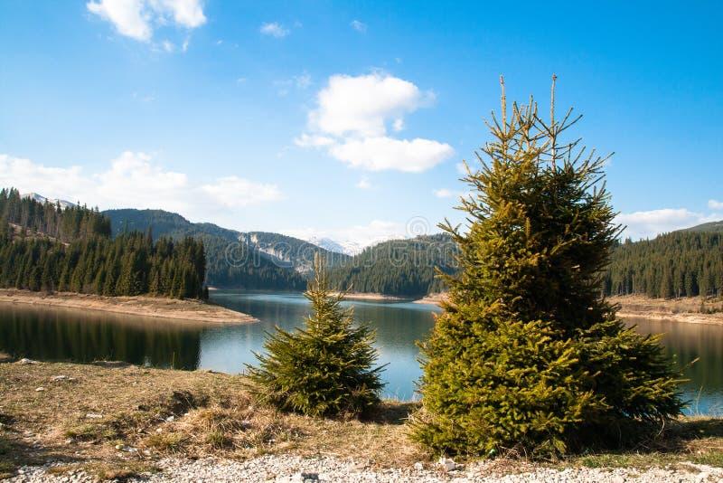 Lago mountain na floresta foto de stock