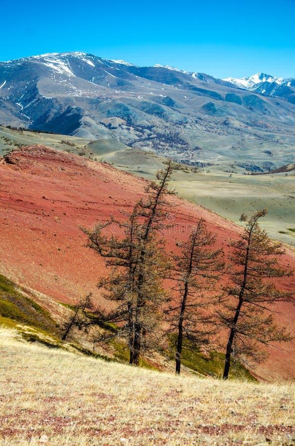 Lago mountain, Russia, Repubblica di Altai fotografia stock libera da diritti